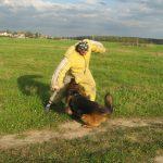 Собака атакует в ногу с разбега