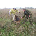 Дрессировка боевой собаки фото
