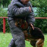 Дрессировка немецкой овчарки на защиту
