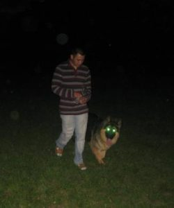 Хозяин дрессирует собаку
