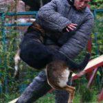 Овчарка атакует под руку