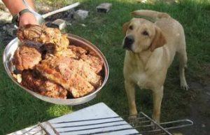 Пример сильных ключевых стимулов пищи для собаки