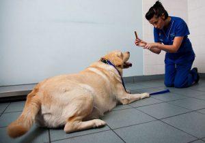 Формирование мотивации у собаки