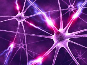 Нервные клетки (нейроны)