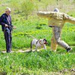 Защитная собака перехватывает удар ногой