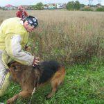 Собака ведёт поединок со злоумышленником