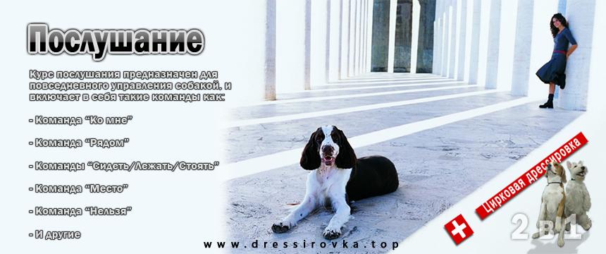 Курс послушания собаки