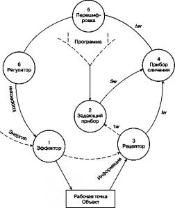 Схема рефлекторного кольца по Бернштейну