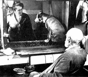 Выработка классических условных рефлексов И.Павловым