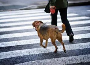 Социализация собаки в городе