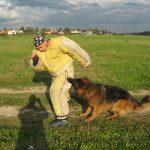 Штурмовая собака удерживает фигуранта