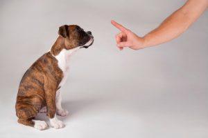 Установление лидерства над собакой