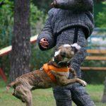 Уворот от собаки со сбивкой