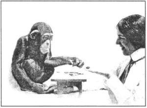 Шимпанзе делает выбор по образцу
