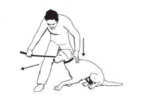 Укладывание собаки приёмом наталкивания.