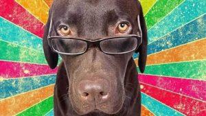 Умная собака в очках.