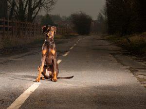 Дрессировка собаки в городе.