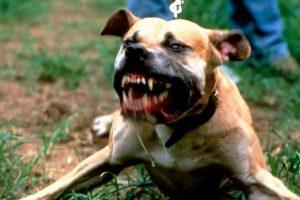 Агрессивная собака рвётся с поводка