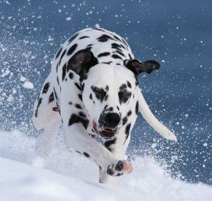 Выбегающая за границы научения собака:)