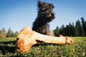 Собака нашла кость