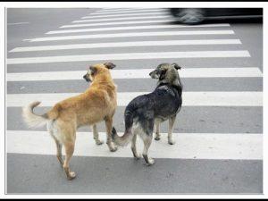 Собаки переходят дорогу
