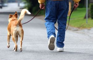 Человек с собакой в общественном месте.