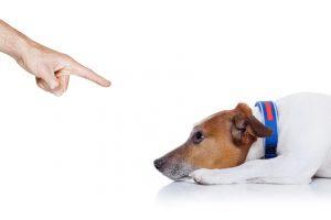 Наказанная собака.