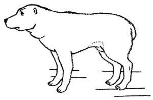 Низкоранговая собака в позе подчинения: хвост прижат, голова опущена, присела на лапах