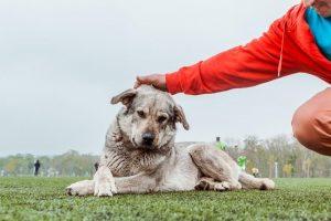 Приучение к поглаживанию собаки.