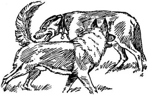 Ранжирование у собак