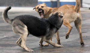 Собачья драка без фиксации укуса.