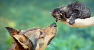 Собака обнюхивает котёнка.