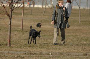 Собака на прогулке.