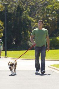 Человек гуляет с собакой.