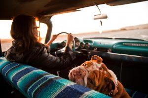 Собака в автомобиле.