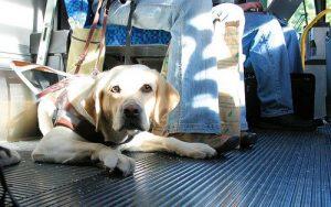Собака с хозяином в общественном транспорте.
