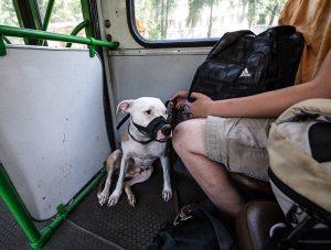 Собака в общественном транспорте.