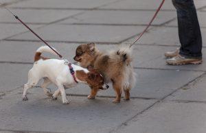 Собаки знакомятся.