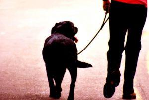 Человек с собакой.