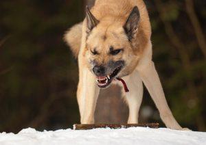 Демонстрационное поведение собаки