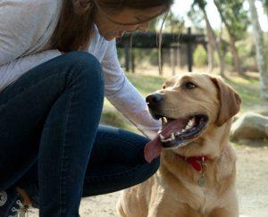 Хозяйка приучает собаку сохранять спокойствие.