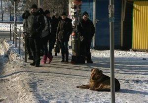 Собака на остановке.