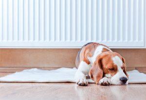 Собака спокойно лежит на подстилке.