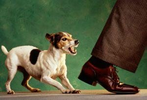 Собака охраняет подстилку.