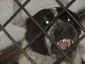 Собака охраняет вольер от хозяина.