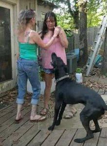 Собака защищает хозяина от члена семьи.