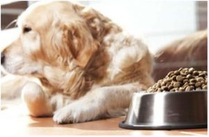 Собака отвернулась от миски с кормом.