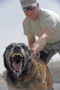 Агрессивная собака с хозяином.