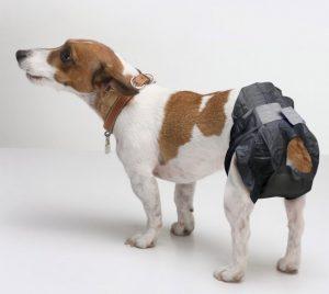 Собака в памперсах.