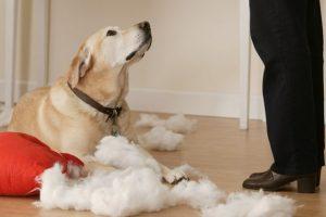 Хозяйка ругает собаку за беспорядок.